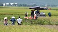 Nông dân Nghệ An thu hoạch lúa xuân trong niềm vui được mùa
