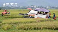 Thay đổi tư duy sản xuất nông nghiệp ở Nghệ An