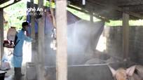 Thêm nhiều ổ dịch tả lợn châu Phi ở Con Cuông, Kỳ Sơn