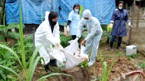 Nghệ An tiêu hủy gần 35 tấn lợn trong 7 ngày