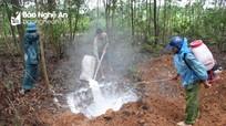 Dịch tả lợn châu Phi kéo dài, nhiều địa phương thiếu đất để tiêu hủy