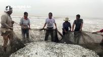 Kéo lưới rùng, ngư dân Nghệ An thu tiền triệu mỗi ngày