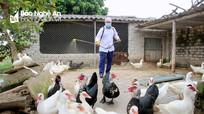 Nghệ An quyết tâm dập ổ dịch cúm gia cầm nguy hiểm H5N6