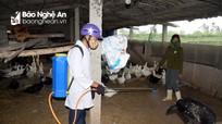 Nghệ An yêu cầu các địa phương huy động cả hệ thống chính trị phòng, chống dịch bệnh động vật