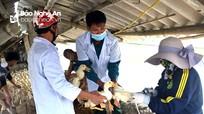 Thiếu cán bộ thú y trong phòng, chống dịch bệnh vật nuôi ở Nghệ An
