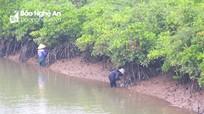Nghệ An: Lội rừng ngập mặn 'đẽo' hàu kiếm tiền trăm mỗi ngày