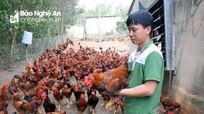 Giá gà ở Nghệ An giảm thê thảm vì ảnh hưởng Covid-19