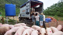 Giá lợn hơi ở Nghệ An bất ngờ tăng phi mã