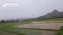 Nghệ An: Nhiều nơi đón cơn mưa 'vàng'