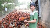 Giá gà trang trại giảm mạnh, gà tại các chợ vẫn neo ở mức cao