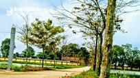 Bắt mắt những con đường nông thôn mới ngập sắc hoa ở Nghệ An