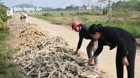 Hàng nghìn tấn sắn của nông dân Nghệ An bị thối sau lũ