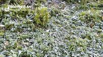 Xuất hiện băng giá ở vùng núi cao Nghệ An