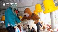 Dịch cúm A/H5N6 tái diễn nguy hiểm tại 'thủ phủ' nuôi gà theo VietGAP ở Nghệ An
