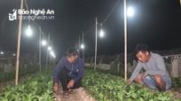 Nông dân Nghệ An chong điện chăm hoa Tết trong giá rét