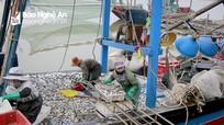 Ngư dân Nghệ An vào mùa cá trích