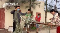 Ngư dân Nghệ An thu 10 triệu đồng chỉ sau 3 giờ đánh bắt vùng lộng