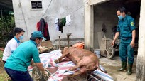 Thanh Chương tiêu hủy trên 170 tấn lợn nhiễm dịch