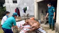 Nghệ An: Bệnh dịch tả lợn châu Phi 'hạ nhiệt'