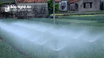 Xem 'hoa nước' trắng xóa trên thảm rau xanh ở Quỳnh Lưu