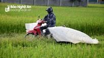 Nông dân Nghệ An săn 'tôm bay' bằng vợt khổng lồ thu tiền triệu mỗi ngày