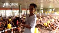 Nghệ An: Người nuôi gà lỗ nặng vì giá giảm sâu, không tiêu thụ được