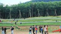 Thời tiết mưa rét, Nghệ An vẫn đón gần 92.000 lượt khách dịp Tết Dương lịch