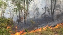 Lửa rừng lại bùng phát tại Diễn Châu (Nghệ An)