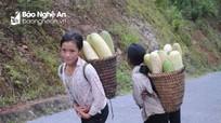 Dưa rẫy siêu 'khủng' ở huyện vùng cao Nghệ An