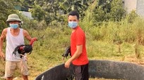Rủ nhau đá gà trong thời điểm cách ly xã hội, hai người đàn ông ở Nghệ An bị xử phạt