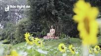 Vườn hoa ở chùa Đức Hậu rực rỡ đón Tết