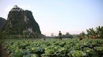 Vườn rau xanh mướt nơi vùng đất khó của Binh đoàn Thảo Nguyên