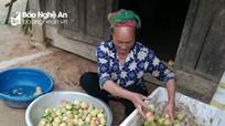 Người Mông thu hàng chục triệu đồng mỗi mùa từ bán đào