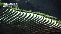 Bức tranh thanh bình từ những thửa ruộng bậc thang ở miền Tây Nghệ An
