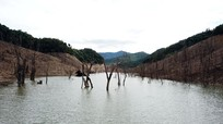 Tiêu điều rừng cây chết khô dưới đáy hồ thủy điện lớn nhất Bắc Trung Bộ