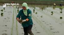 Mặc khuyến cáo, rét dưới 10 độ nông dân vẫn cấy lúa