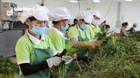 TH đầu tư vào Nghệ An 65.000 tỷ đồng với 21 dự án