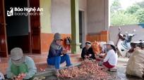 Tổ hợp tác triệu phú độc đáo ở một vùng thuần nông Nghệ An