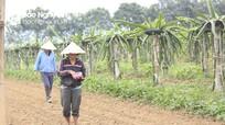 Nông dân Thanh Chương chia sẻ kinh nghiệm trồng xen cho thu nhập '2 trong 1'