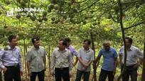 Nông dân Tương Dương đạt doanh thu trên 20 tỷ đồng từ chanh leo