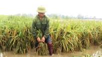Nông dân Nghệ An ra đồng khắc phục lúa xuân bị gãy đổ