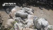 Quỳnh Lưu: Tiêu tiêu hủy hơn 2 tấn lợn nhiễm dịch tả châu Phi