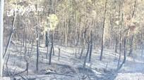 5 ha rừng thông ở Quỳnh Lưu bốc cháy