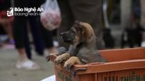 Độc đáo phiên chợ chó ở Nghệ An
