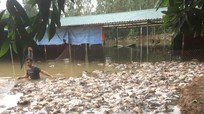 Nhiều 'tỷ phú chân đất' ở Nghệ An trắng tay sau một đêm do lũ dữ