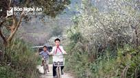 'Thung lũng hoa' hút mắt nơi miền Tây xứ Nghệ