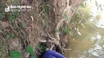 Phát hiện người đàn ông lạ bất tỉnh trên bè nứa ở sông Hiếu