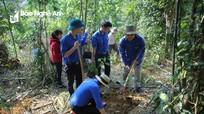 Tuổi trẻ Quế Phong trồng mới 2.200 cây dổi lấy hạt và sa nhân tím