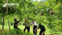 Báo Đảng khu vực miền Trung - Tây Nguyên đồng hành với nông dân thời kỳ hội nhập