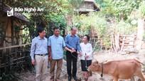 Bí thư huyện rẻo cao Nghệ An tiết kiệm tiền lương mua bò tặng hộ nghèo